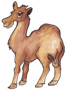 Caden Camel-sm