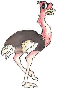 Ollie Ostrich-sm
